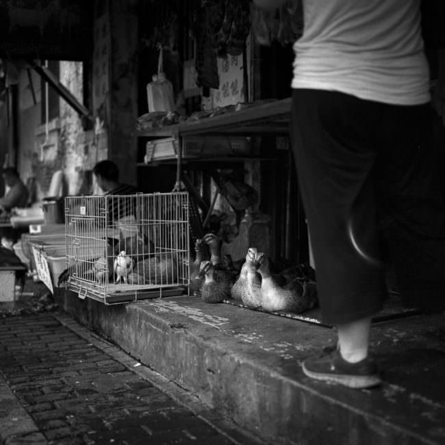 Enten auf einem Straßenmarkt mit weiteren Enten in einem Käfig