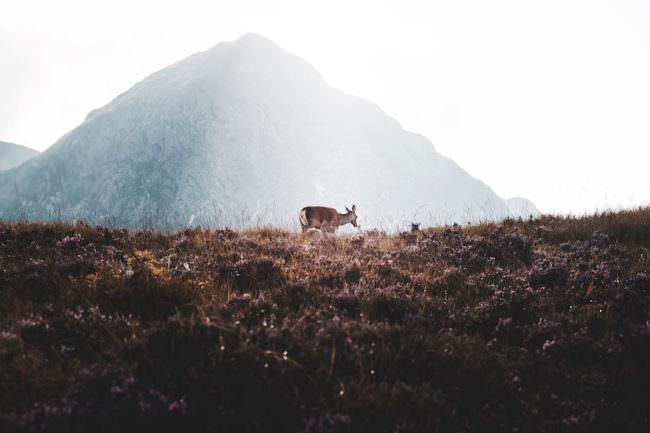 Reh steht auf einer Wiese vor einem Bergpanorama.