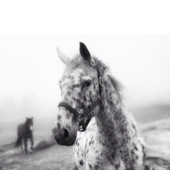 © Joan Kocak