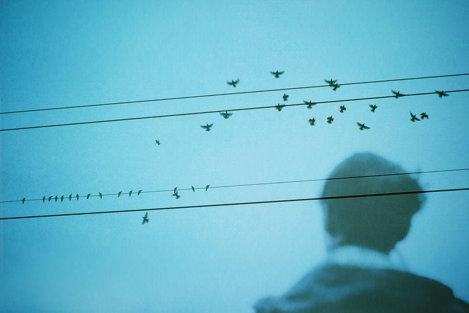 Doppelbelichtung eines Mannes der nach oben blickt mit Stromkabeln auf denen Vögel sitzen.
