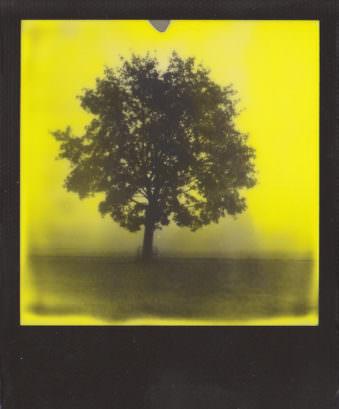 Gelbstichiges Polaroid, auf dem man die Silhouette eines Baumes sieht.