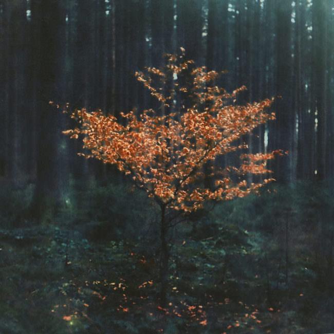 Bild eines kleinen Baumes mit Orangen Blättern in einem Wald.
