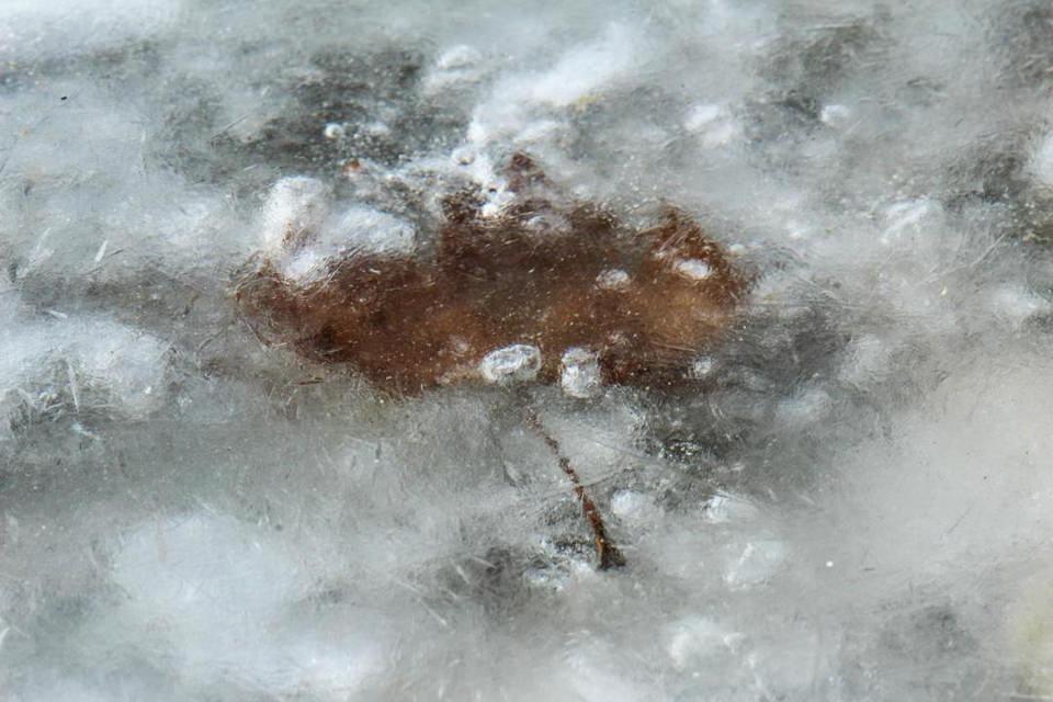 Ein Blatt ist unter einer Eisschicht gefroren.