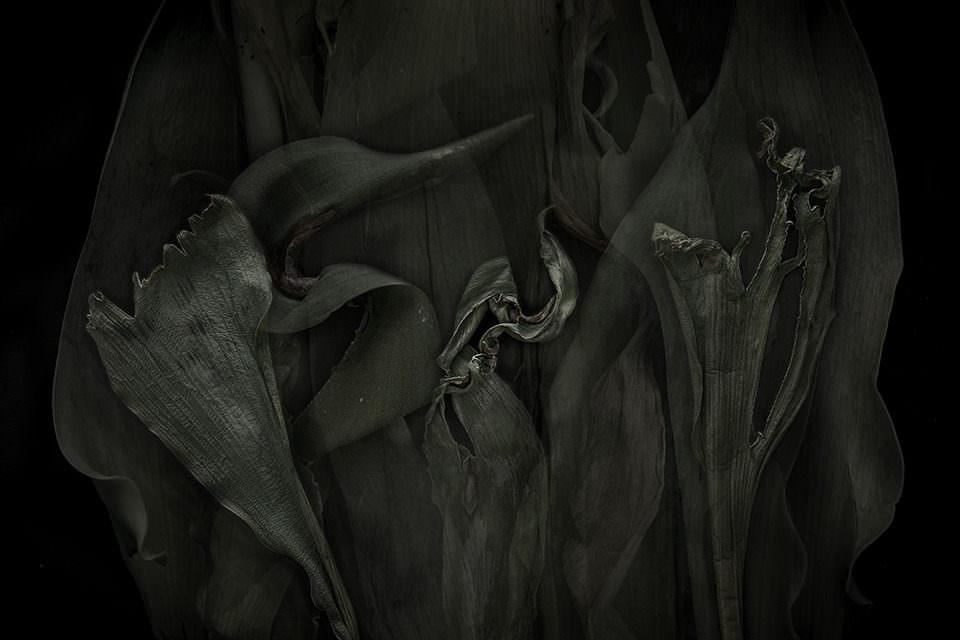 Vertrocknete Pflanzen liegen auf schwarzem Hintergrund.