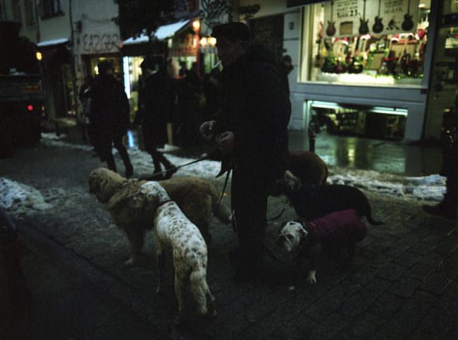 Ein Mann, der mit mehreren Hunden Gassi geht