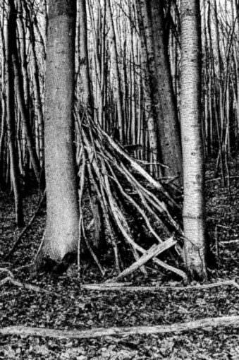 Im Wald siehst Du Bäume.