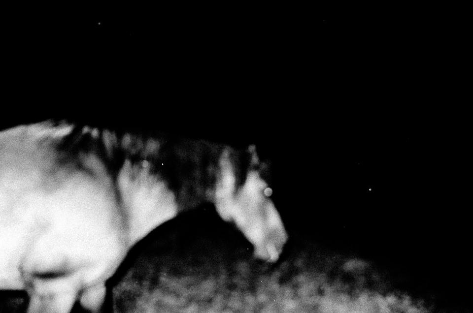 Ein Pferd in der Nacht.
