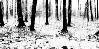 Ein Winterwald
