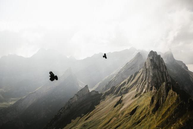 Vögel über einem Gebirge