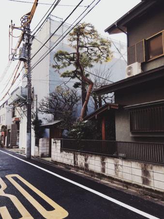 Ein Teile einer Straße mit Häusern, Bäumen und vielen Stromleitungen.