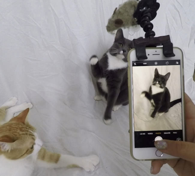 Eine Klemme auf einem Smartphone in der Katzenspielzeug eingeklemmt ist.