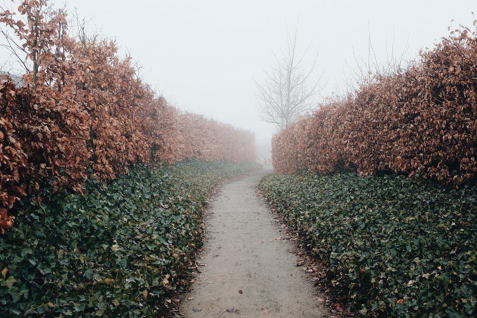 Minimalistische Aufnahme eines Weges zwischen Sträuchern mit braunen und grünen Blättern im Nebel.