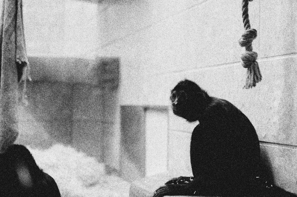 Schwarzweiß-Aufnahme eines Affen