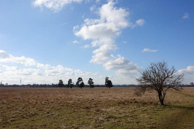 Felder und blauer Himmel