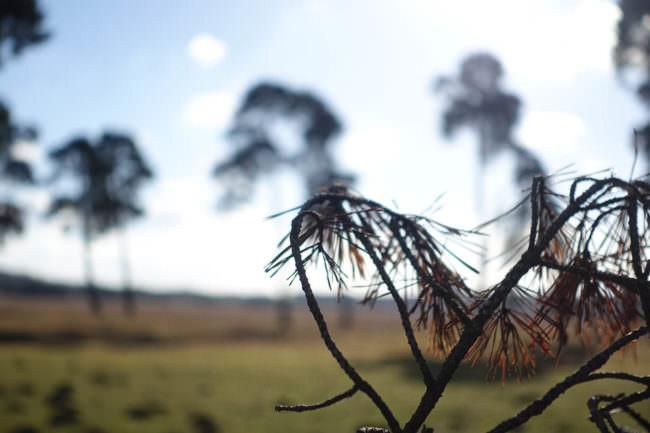 Ein Zweig vor blauem Himmel