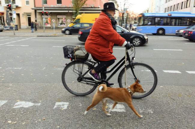 Eine Person auf einem Fahrrad führt einen Hund an der Leine.