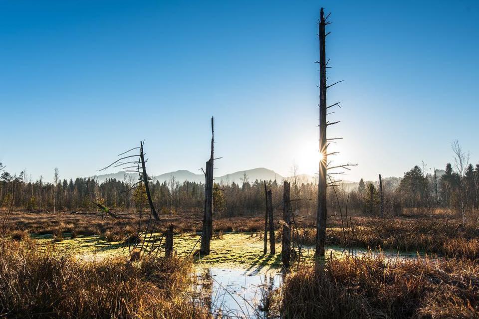 Farbiges Landschaftsbild mit abgestorbenen Bäumen im Fokus.