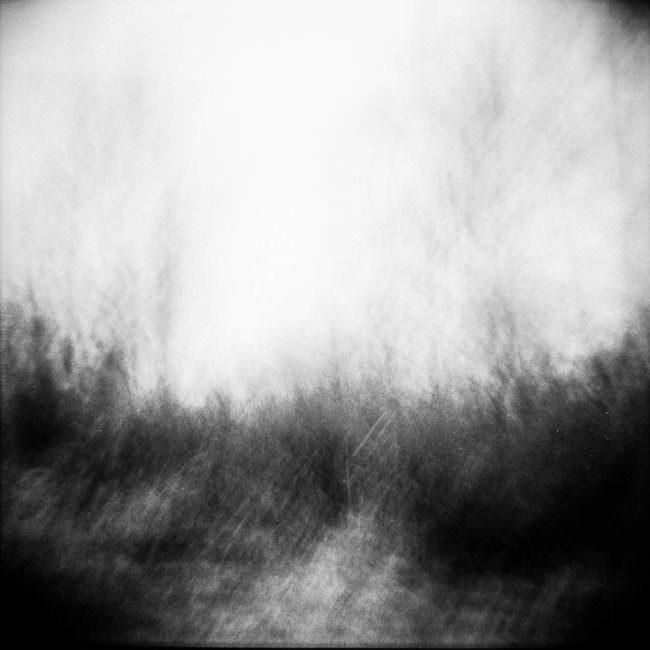 Verwackelte, unscharfe Ansicht eines Waldes in schwarzweiß.