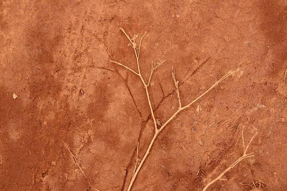 Abdruck eines Zweiges in rotem Sand mit dem Zweig daneben liegend.