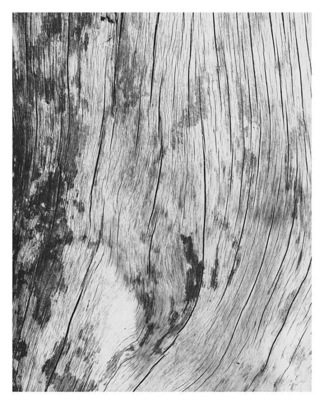 Nahaufnahme von der Struktur eines Stücks Holz.