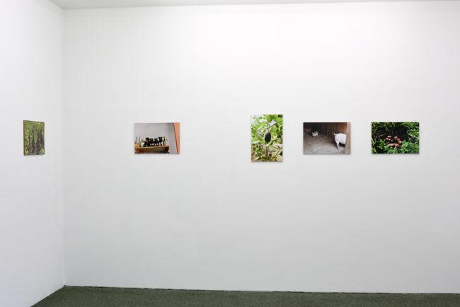 Ansicht einer Raumecke mit fünf Fotografien an der Wand.