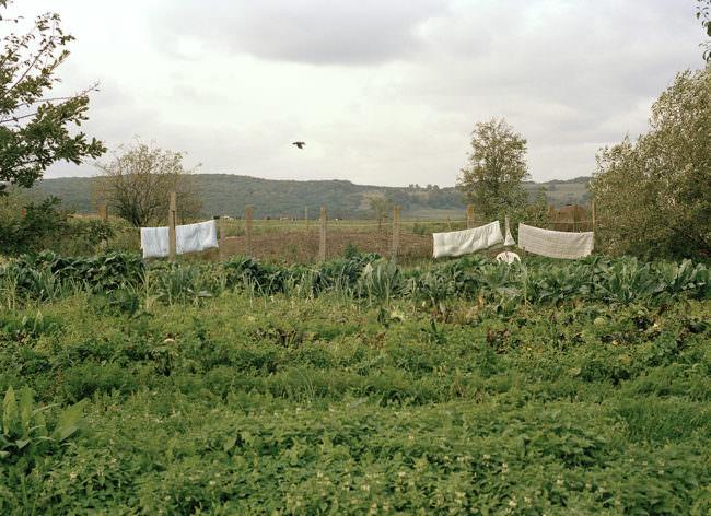 Eine grüne Wiese mit weitem Blick auf der eine behängte Wäscheleine zu sehen ist.