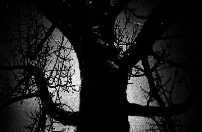 Schwarzweißaufnahme eines Baumes