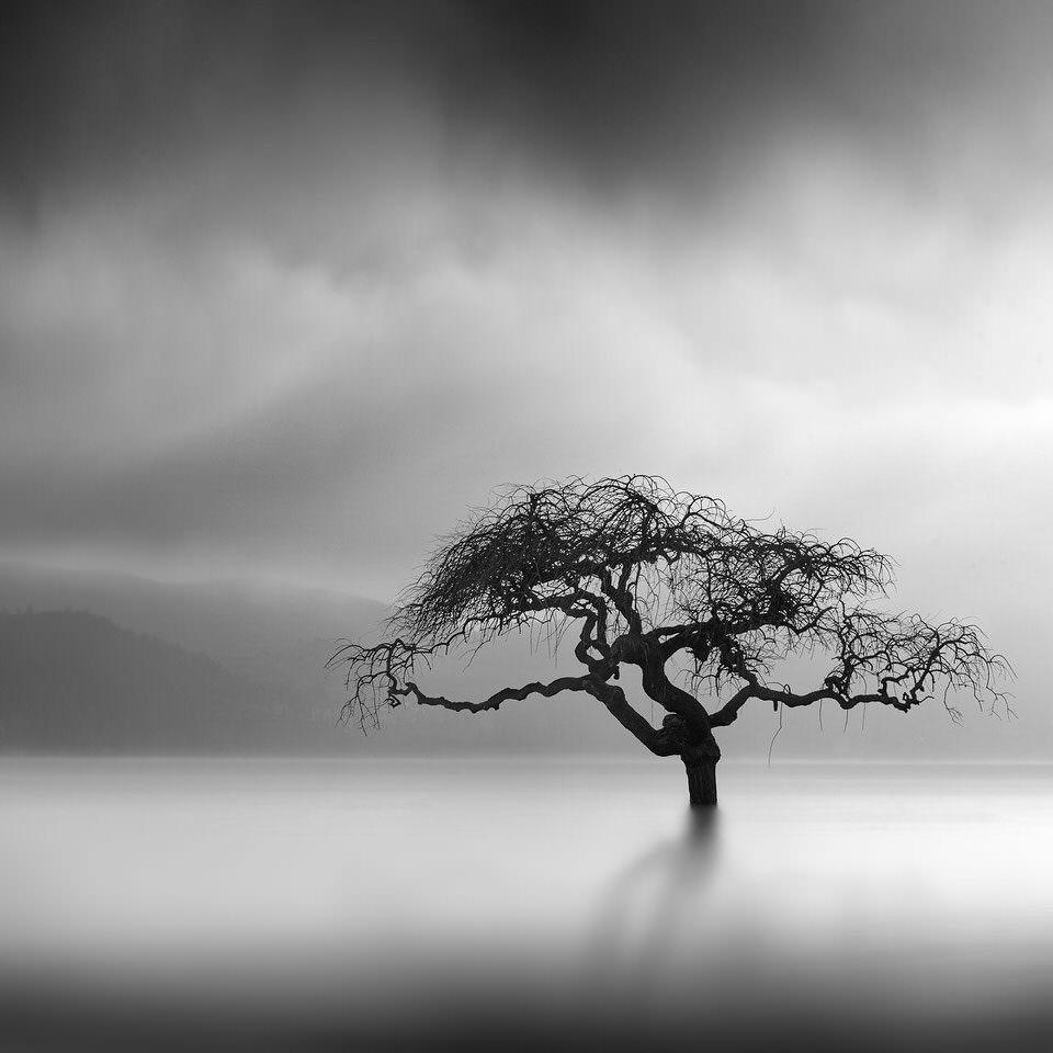 Ein Baum in einem See