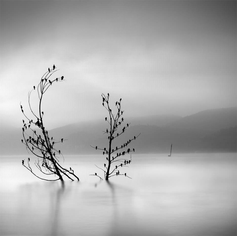 Vögel auf einem Baum im See