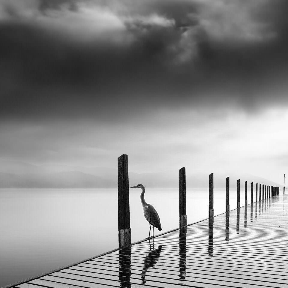 Ein Reiher in einem See