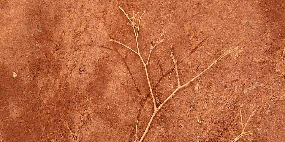 Abdruck eines Zweiges in rotem Sand mit dem Zwei daneben liegend.