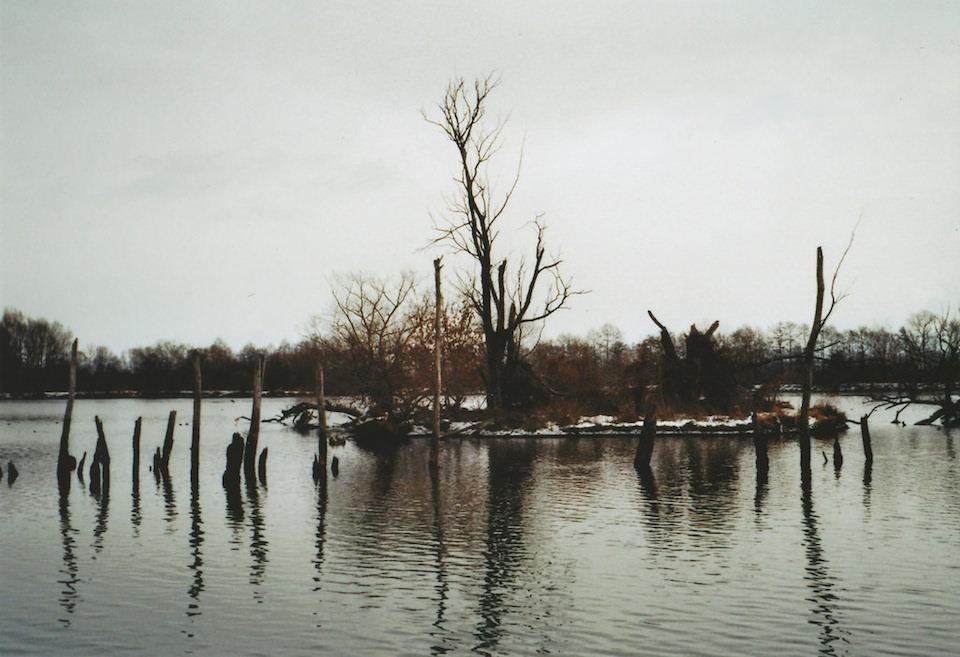 Eine Insel mit kahlen Bäumen auf einem See