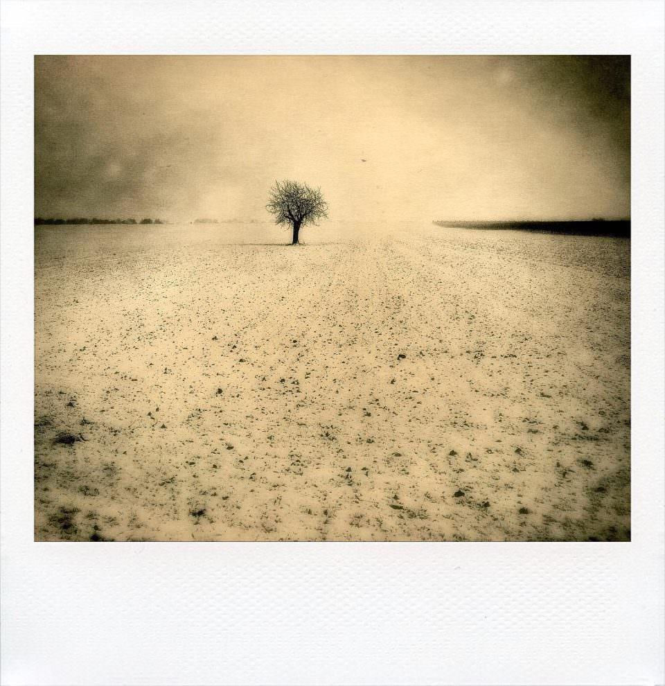 Polaroid einer verschneiten Landschaft in Sepiatönung. Darauf zu sehen ein Feld mit einem einzelnen Baum.