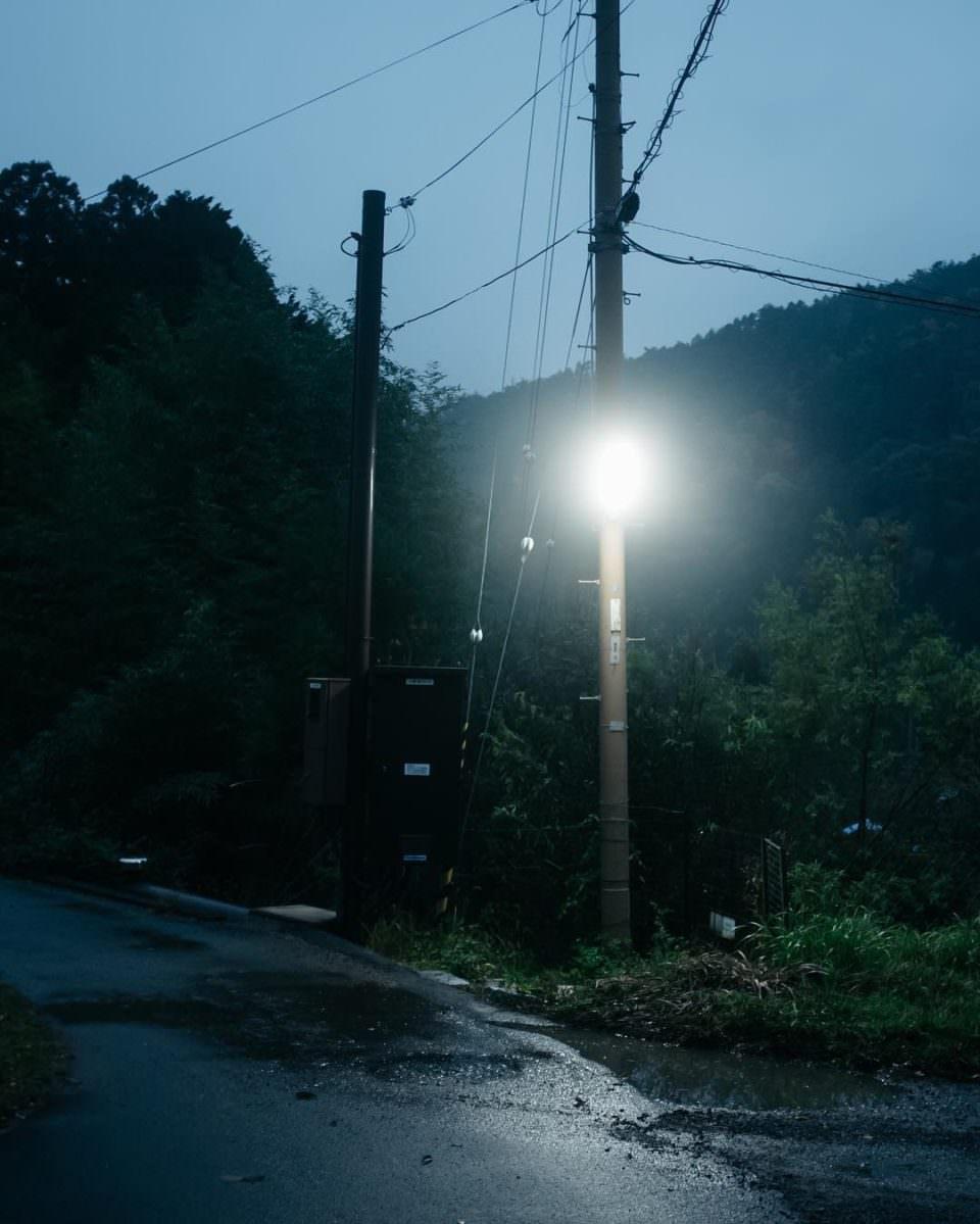 Nächtliche Straßensituation mit einer leuchtenden Laterne und Bäumen ringsherum an einer Straße.