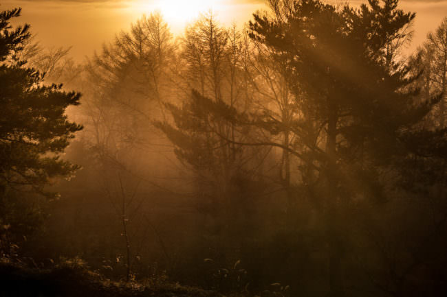 Ein Wald in goldenes Licht getaucht