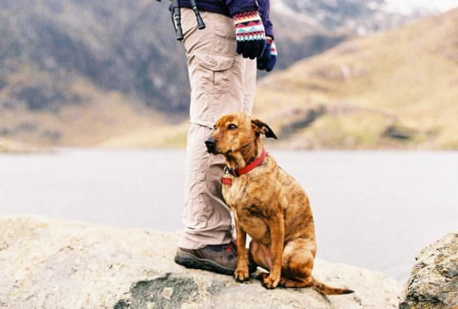 Die Beine eines Menschen, vor denen ein Hund sitzt.
