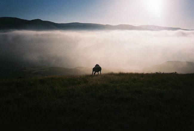 Ein Tier steht vor einer nebeligen Landschaft.