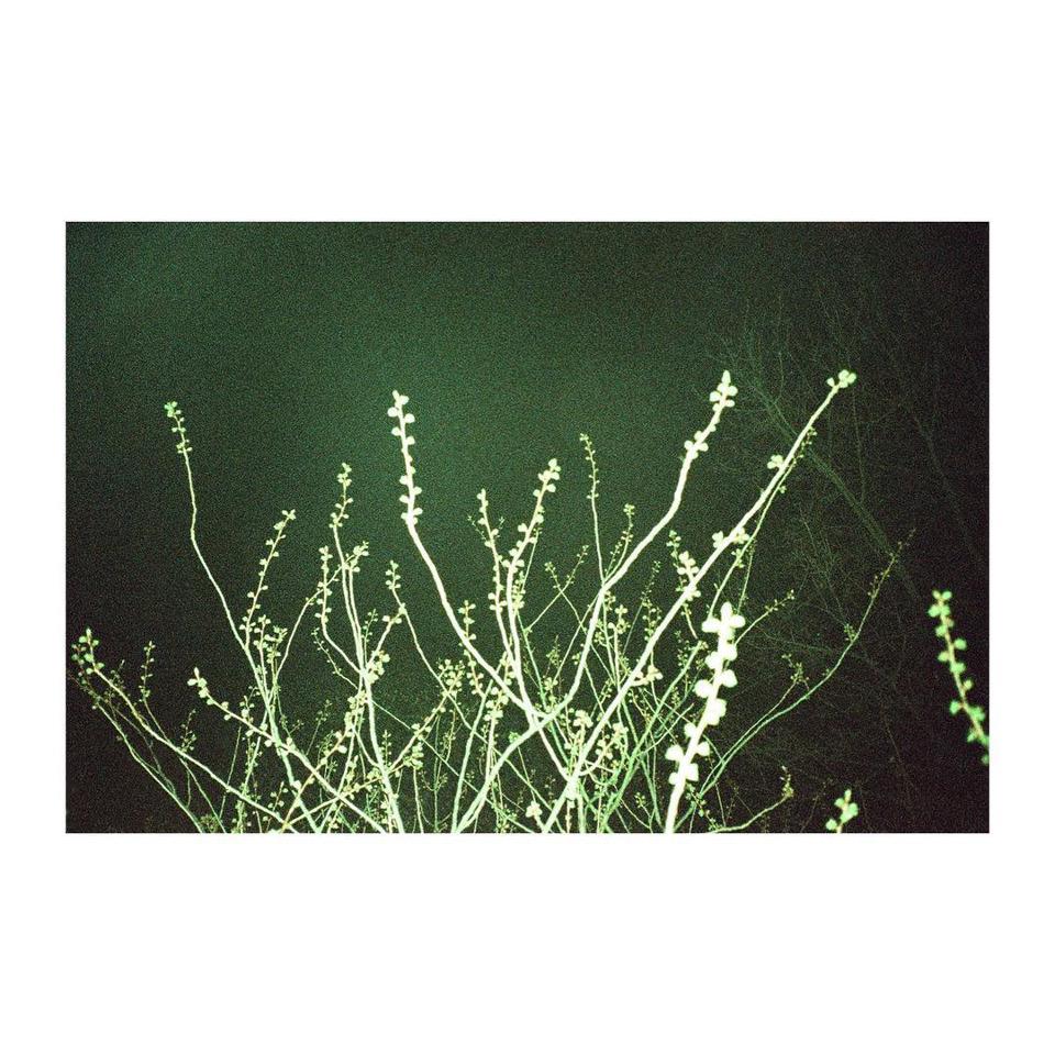 Gras im Blitzlicht