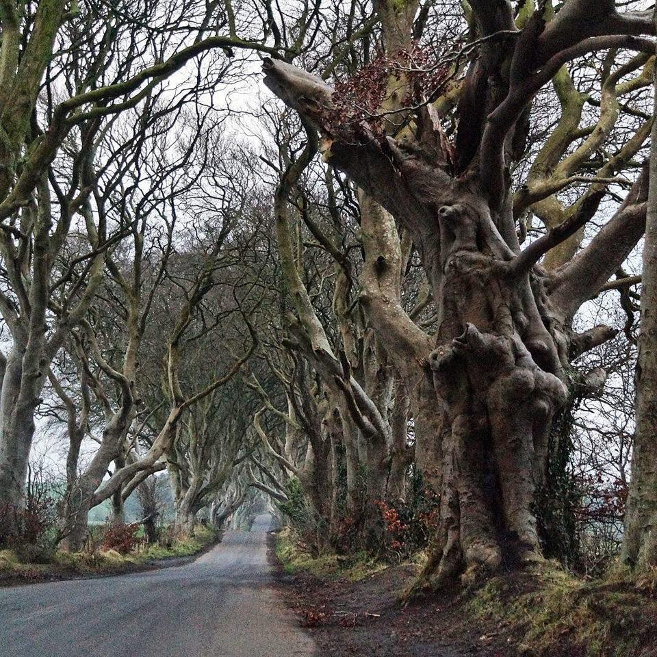 Ein Weg durch hohe Bäume