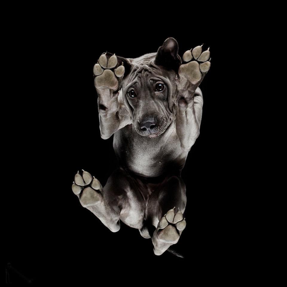 Hund von unten
