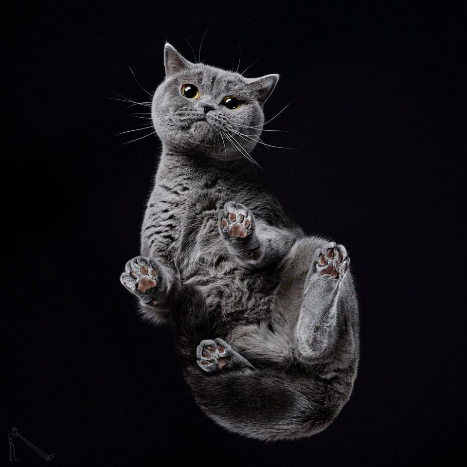 Katze von unten