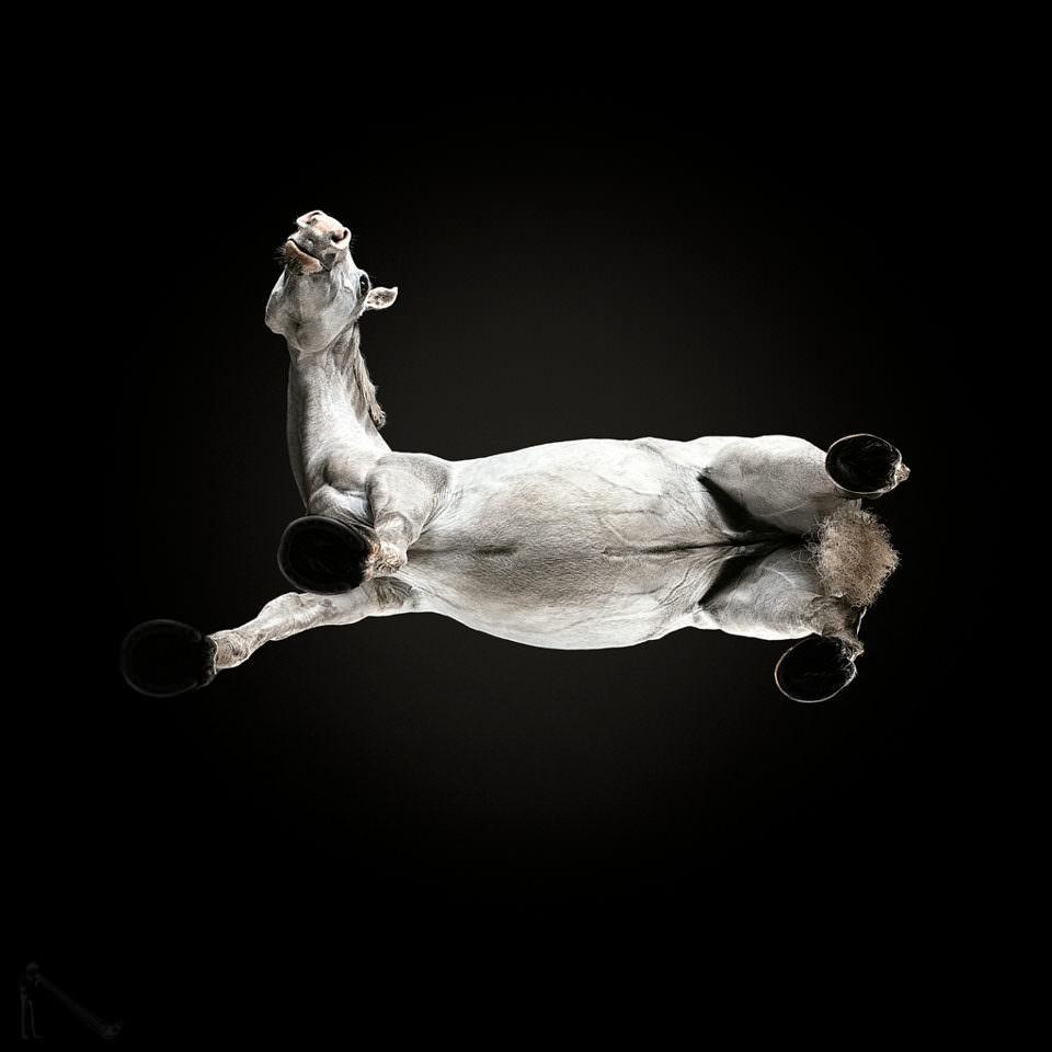 Pferd von unten