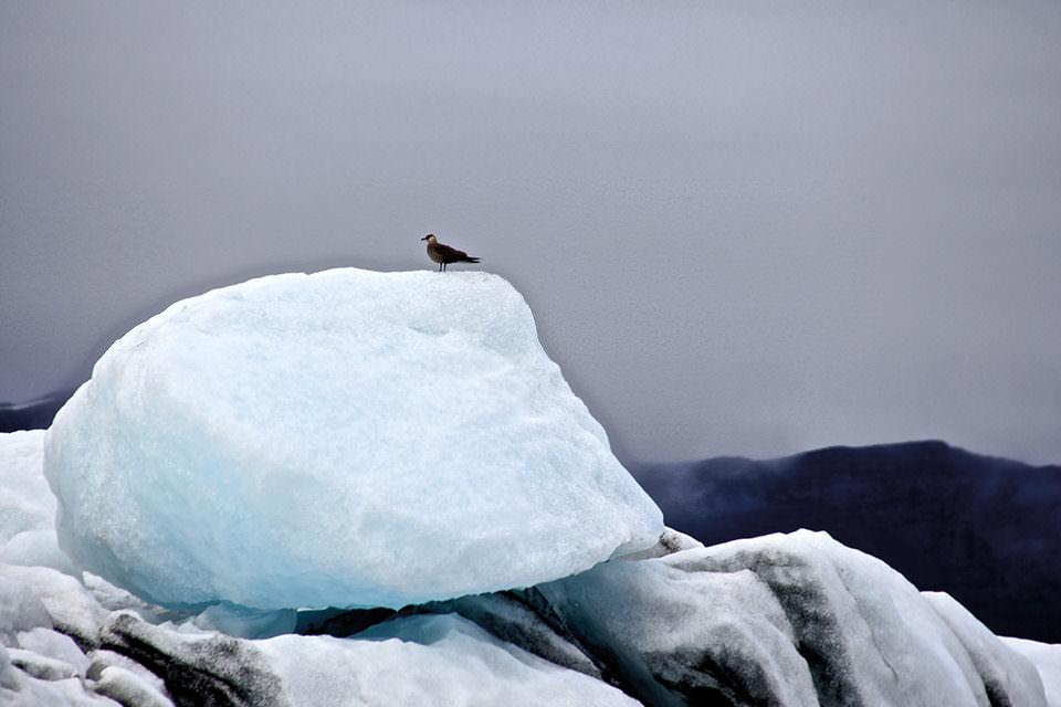 Ein Vogel auf einem Eisberg