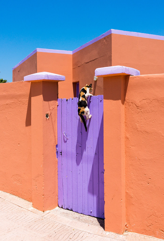 Eine Katze springt auf ein lilanes Tor