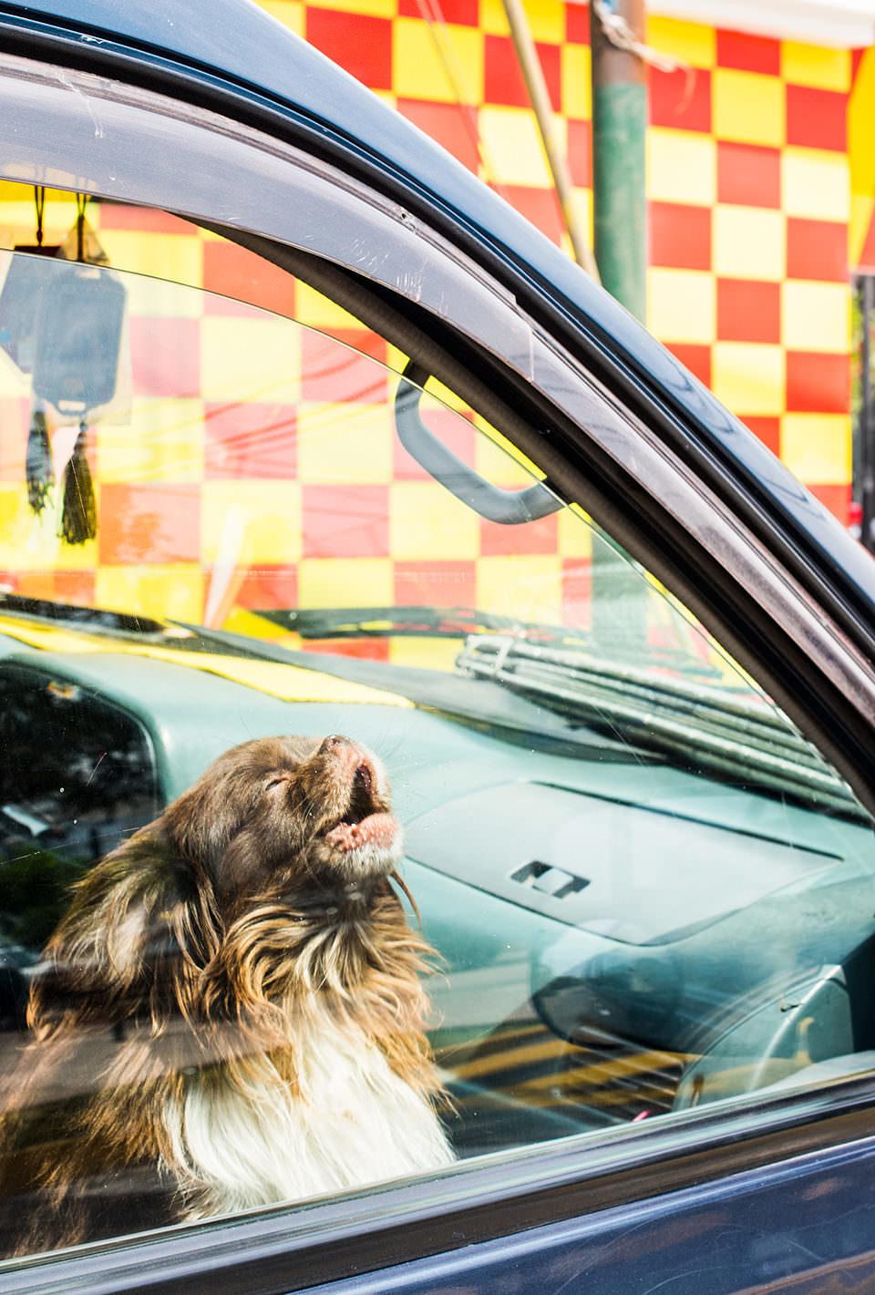 Ein Hund im Auto