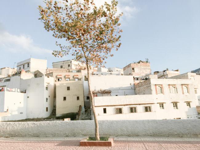 Ein Baum, der auf einem Platz vor vielen hellen Häusern steht.