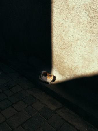 Eine Katze, die sich in einem Sonnenstrahl wärmt.