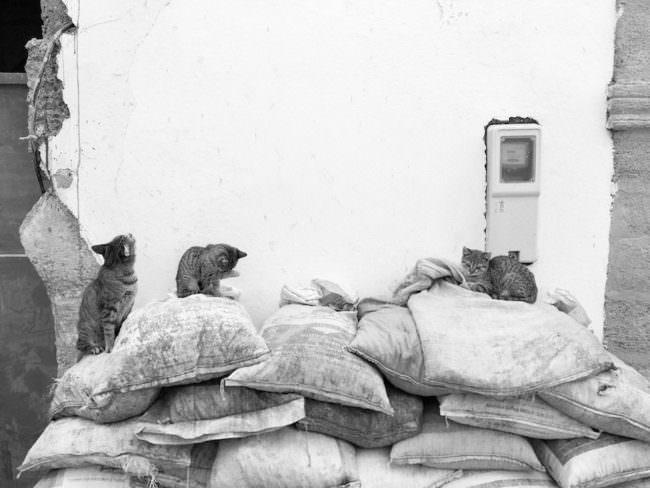 Drei Katzen sitzen auf alten Säcken vor einer Hauswand.