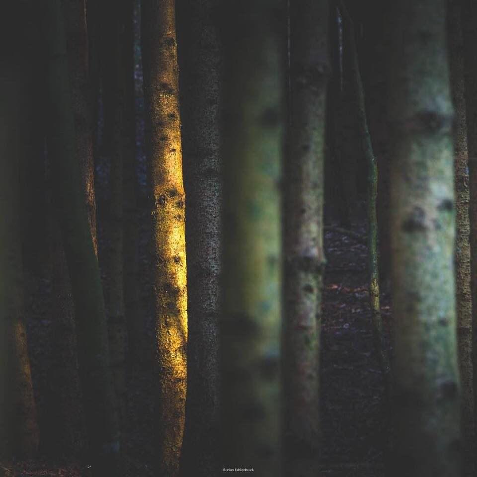 Licht auf Baumstämmen