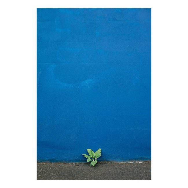 Unkraut vor einer blauen Wand